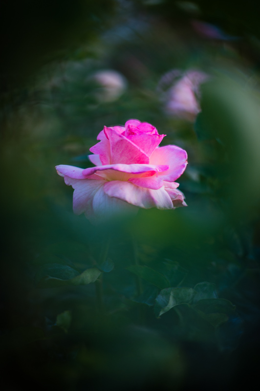 INLIGHT_photowalk_rosegarden-6.jpg