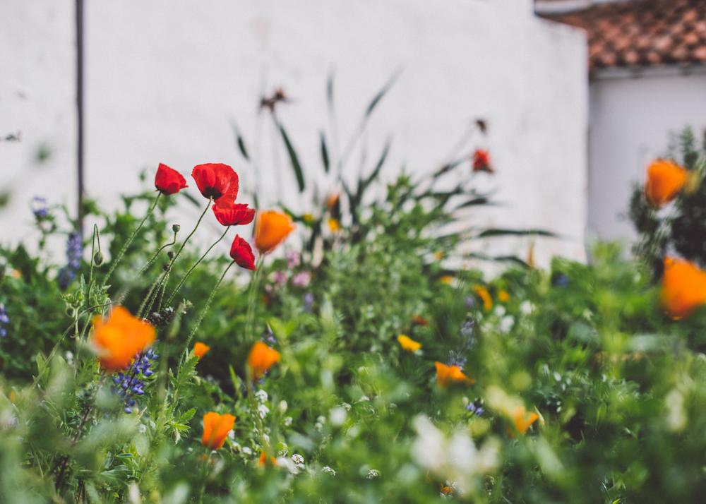 Mission Rose Garden-0482.jpg