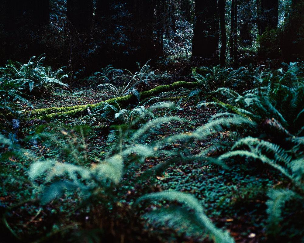 ©lindsey baumsteiger_fine art photography10.jpg