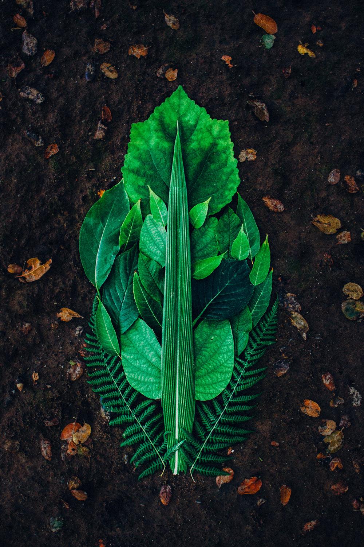 Leaf_-2.jpg