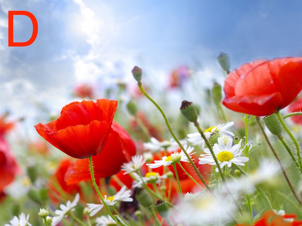 summer-flowers-wallpapers-38.jpg