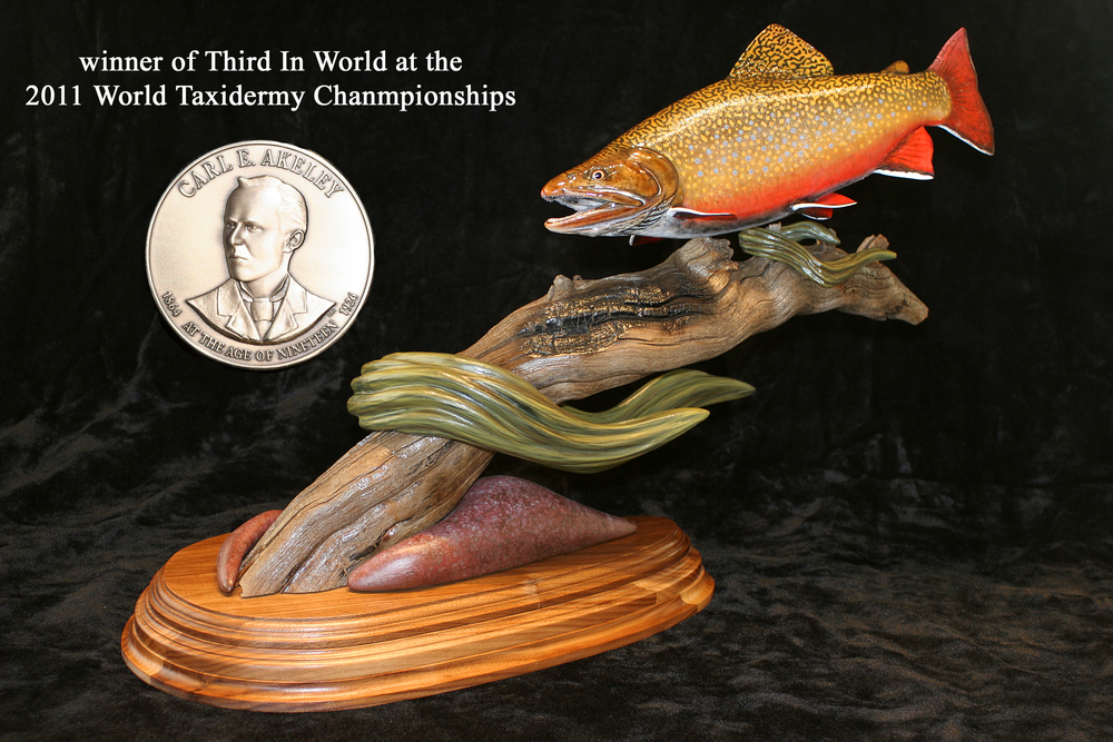 Third in World brook trout