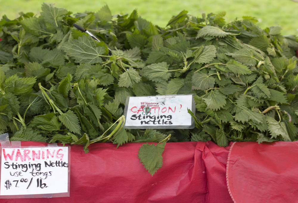 "In case you were wondering, these nettles are thinking, ""WARNING, CAUTION, I STING YOUUUUUUUUUUUUU, MWHAHAHA."""