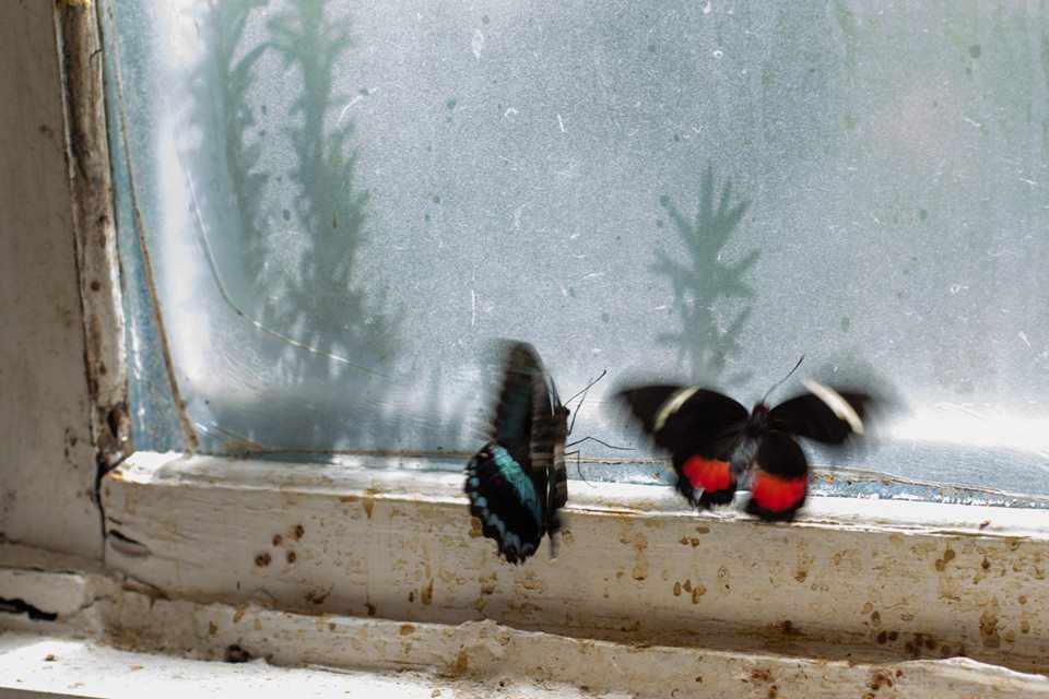 There were a couple of stray butterflies hovering by this window. I loved the way they looked against the haze.