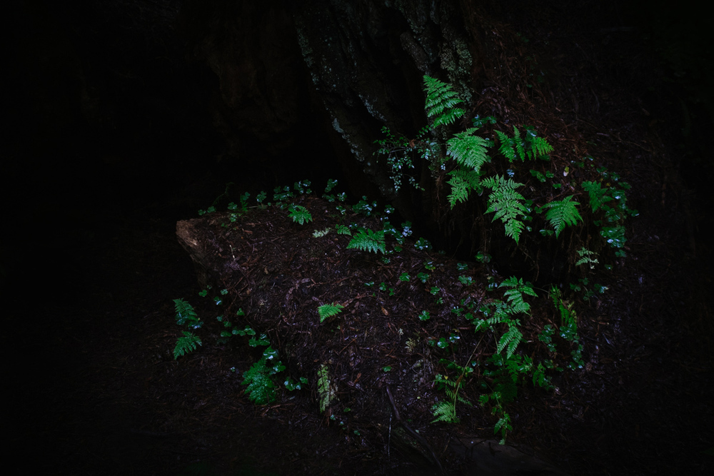 winter_redwood_trip.jpg