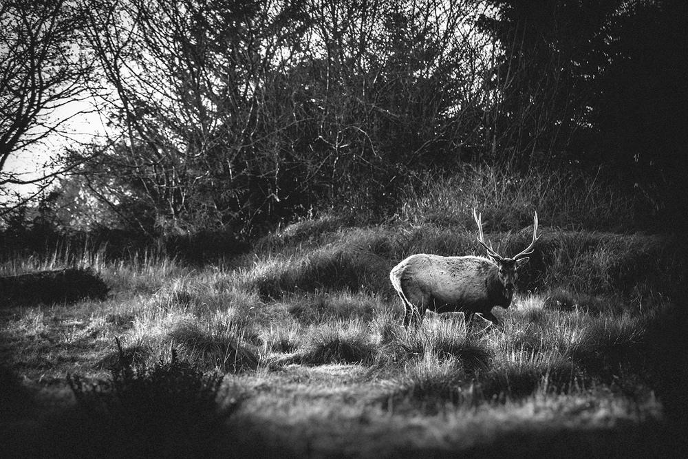 elk-1_small.jpg