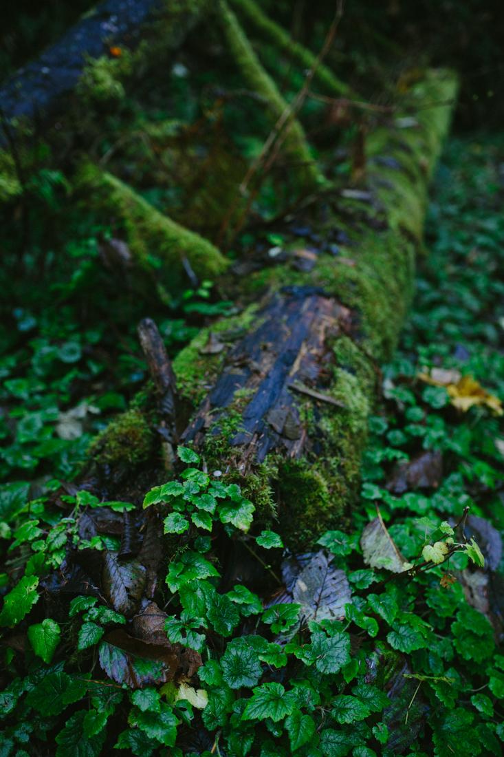 BigSur_last_forest-2.jpg