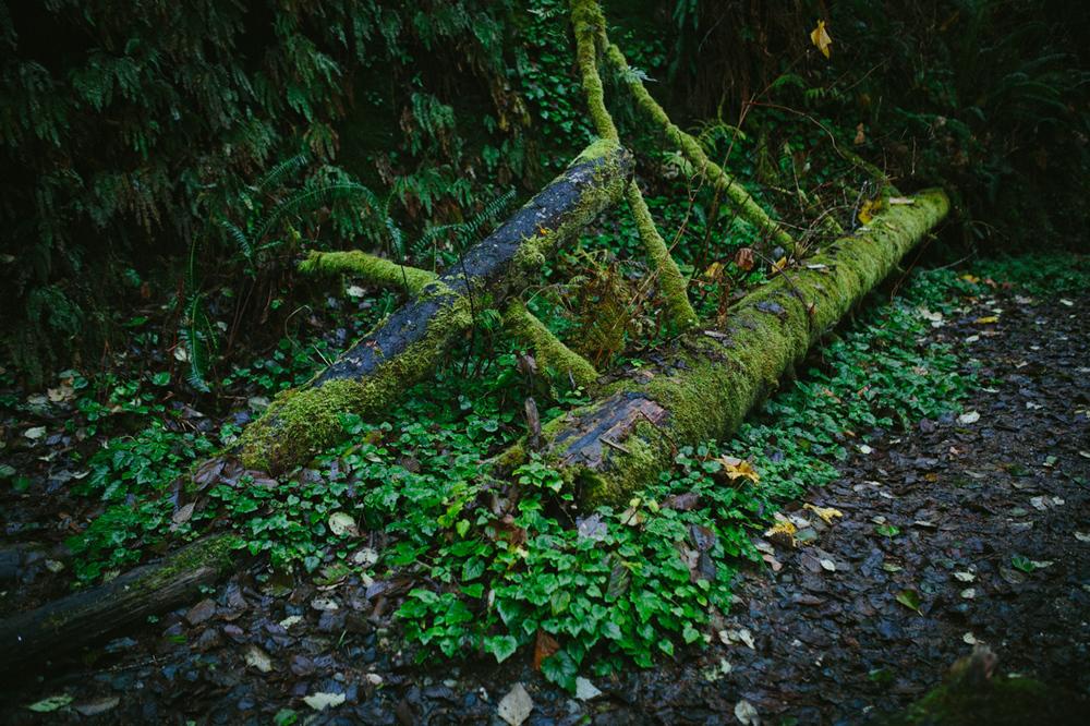 BigSur_last_forest-1.jpg