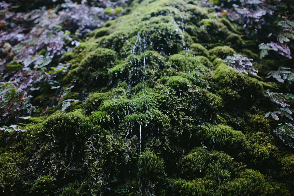BigSur_last_forest-8.jpg