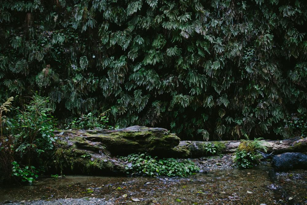 BigSur_last_forest-7.jpg