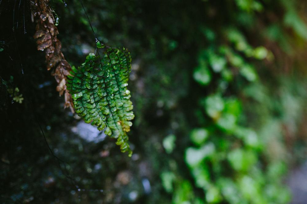 BigSur_last_forest-9.jpg