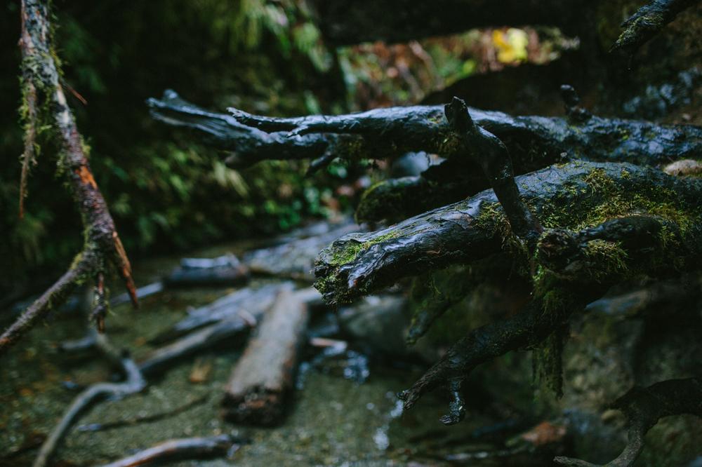 BigSur_last_forest-12.jpg