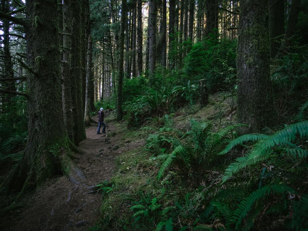BigSur_last_forest-20.jpg