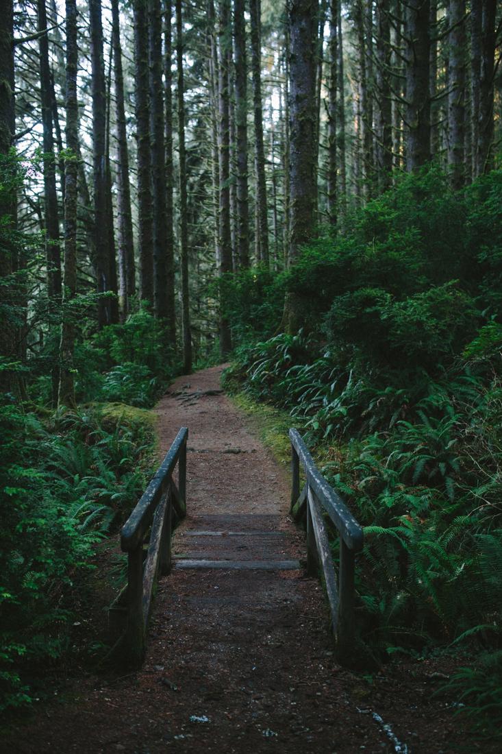BigSur_last_forest-25.jpg