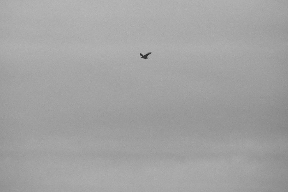 birds-3.jpg