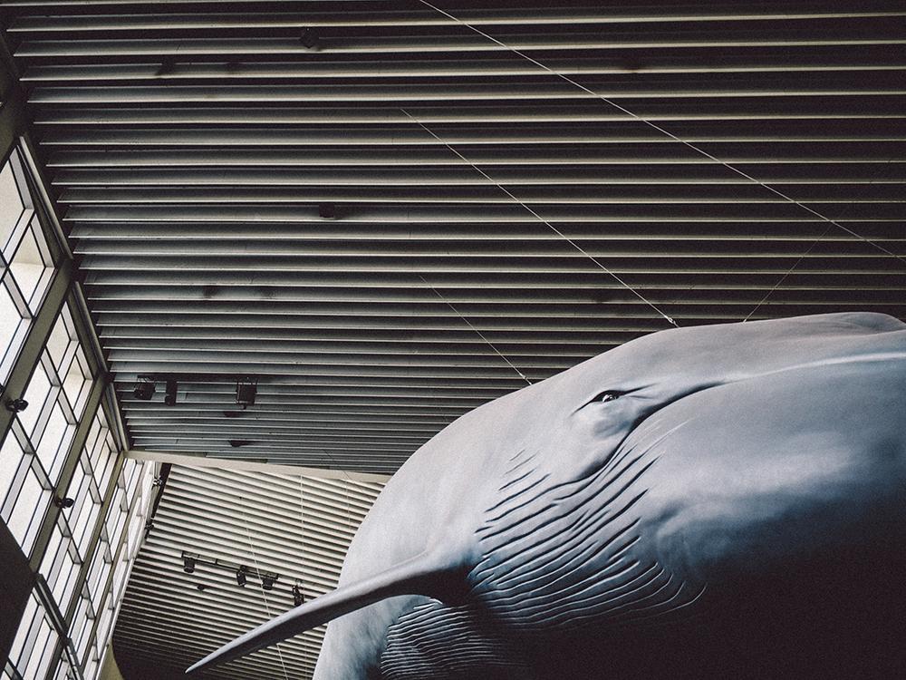 LongBeach_Aquarium-8.jpg