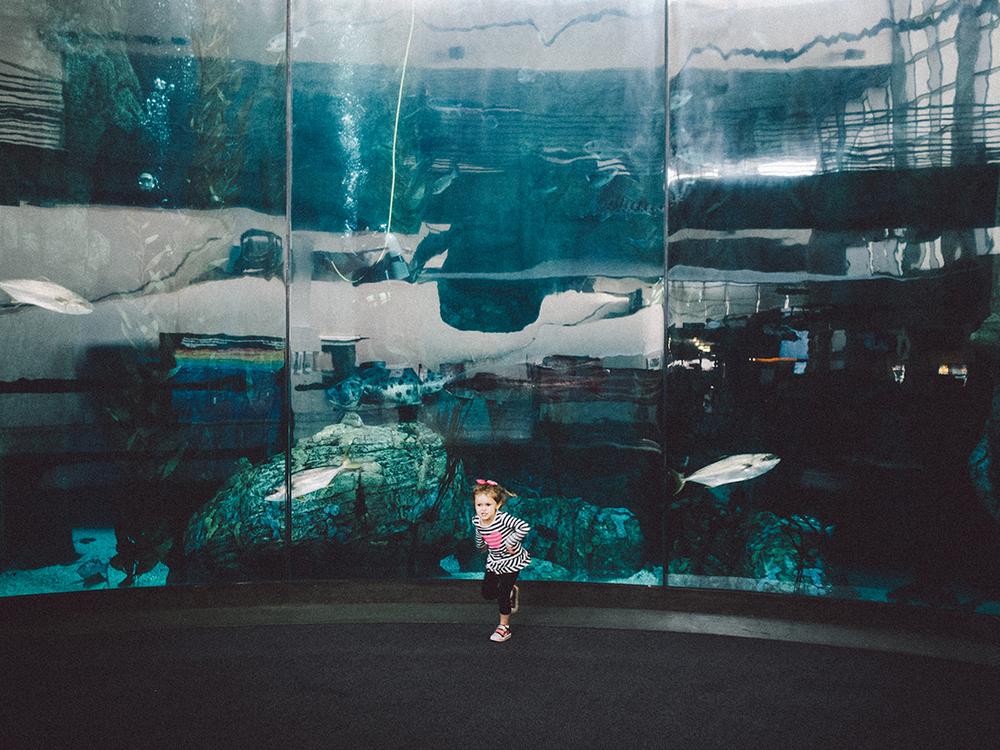 LongBeach_Aquarium-9.jpg