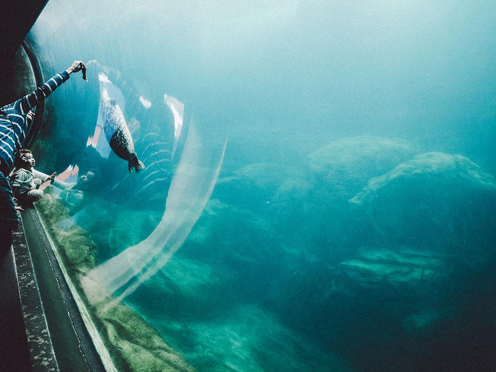 LongBeach_Aquarium-14.jpg