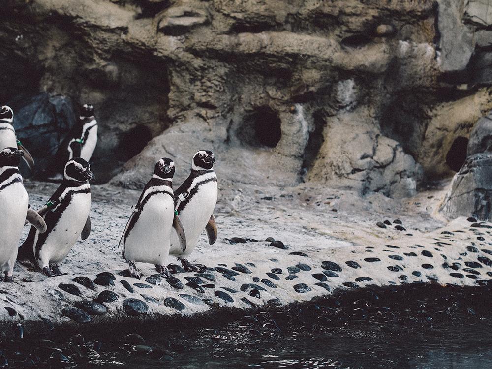 LongBeach_Aquarium-18.jpg