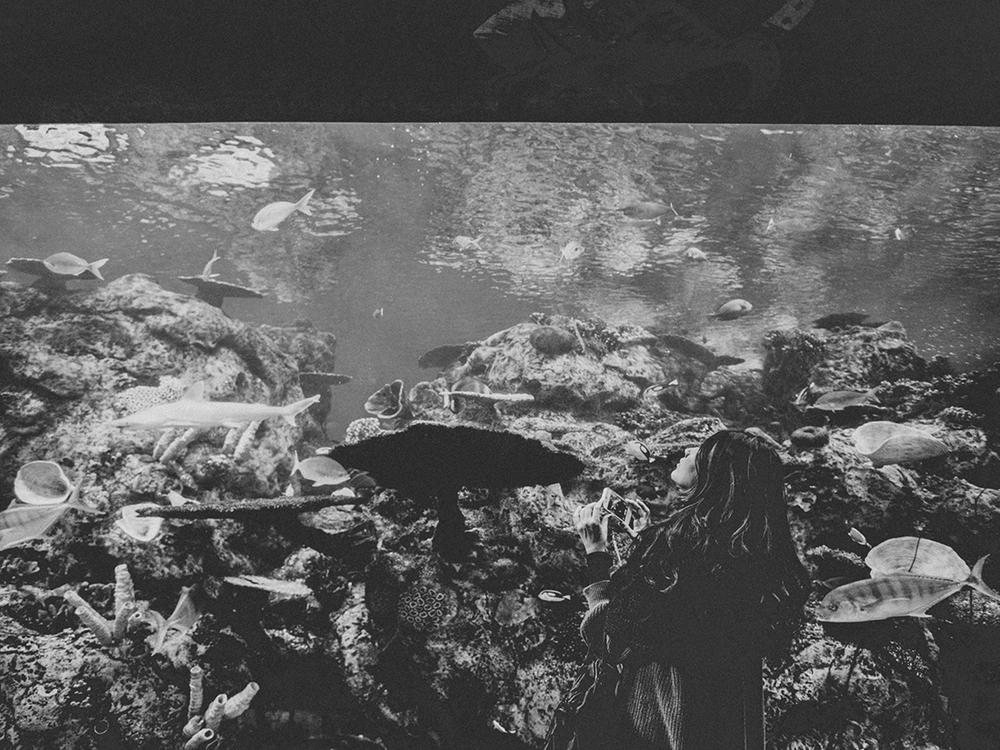 LongBeach_Aquarium-28.jpg