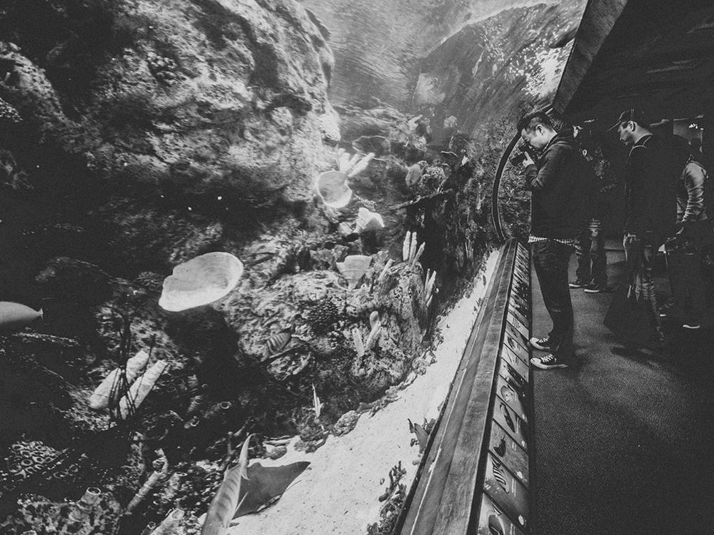 LongBeach_Aquarium-30.jpg