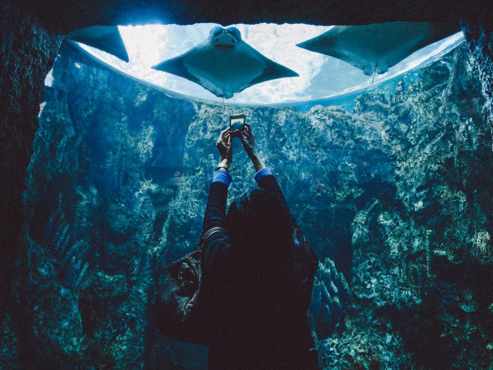LongBeach_Aquarium-32.jpg