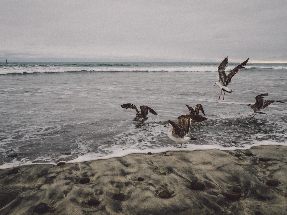 oceanSide_fotoby-10.jpg