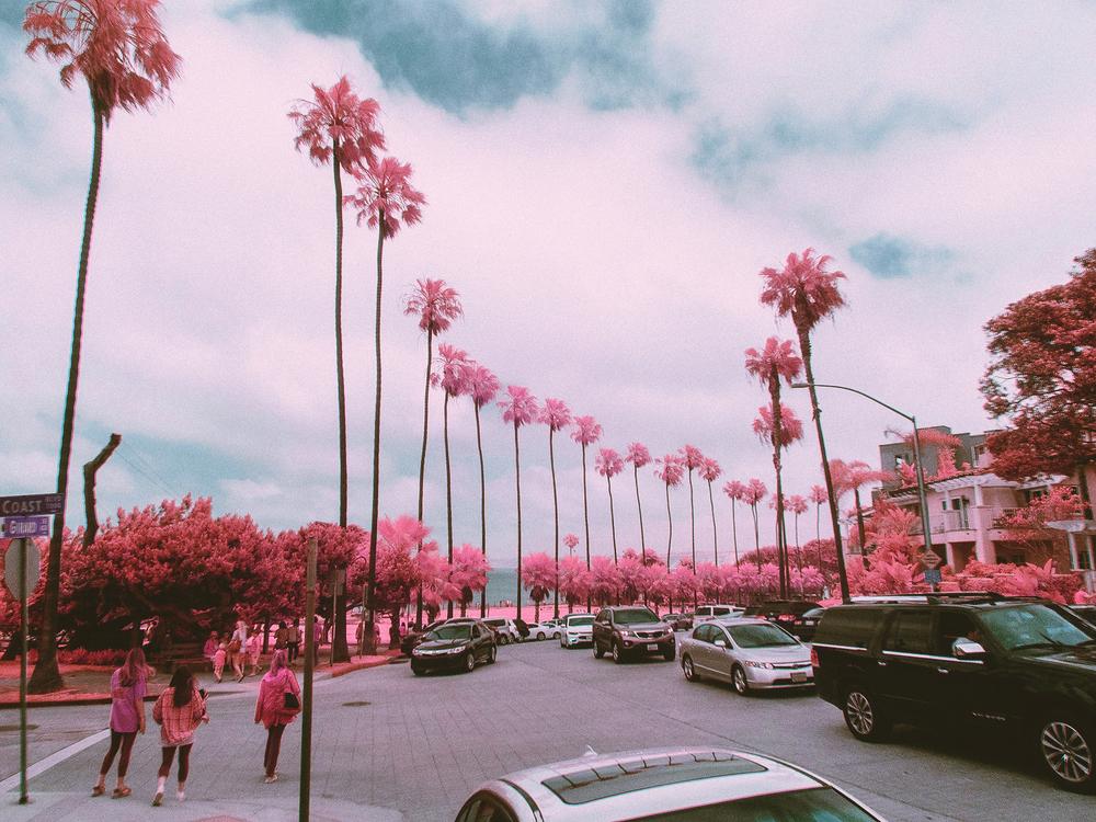 IR_pink_sanDiego-6.jpg