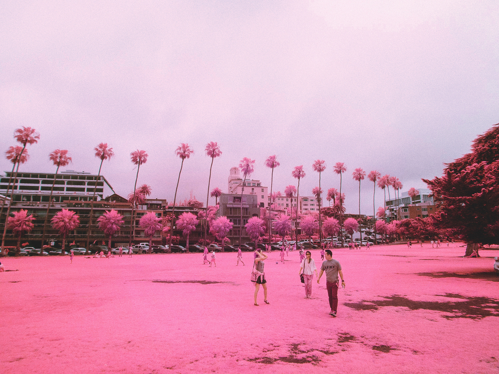 IR_pink_sanDiego-10.jpg