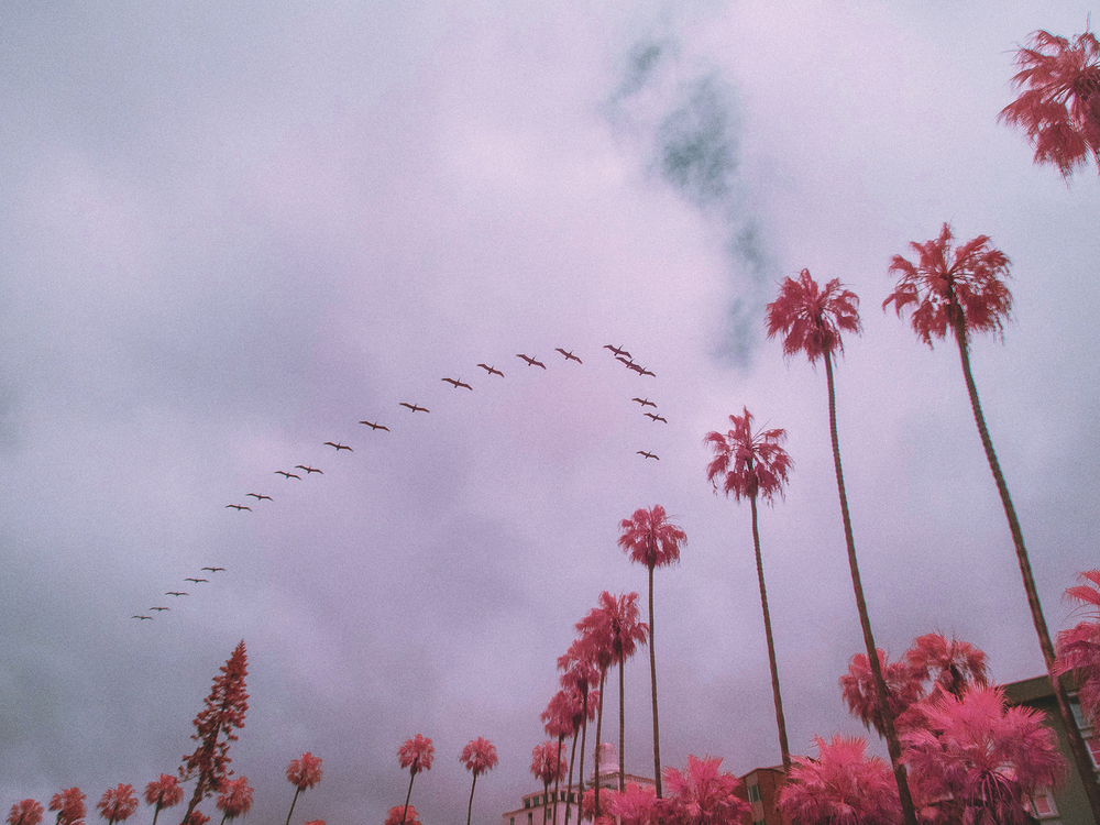 IR_pink_sanDiego-24.jpg
