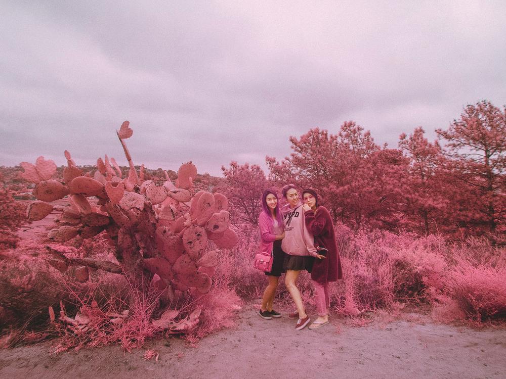 IR_pink_sanDiego-30.jpg