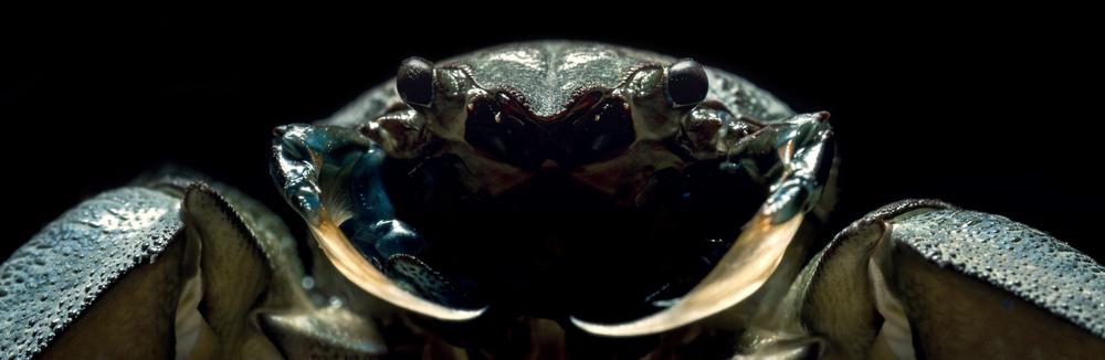 Crustacea - 550 x 900 - $300