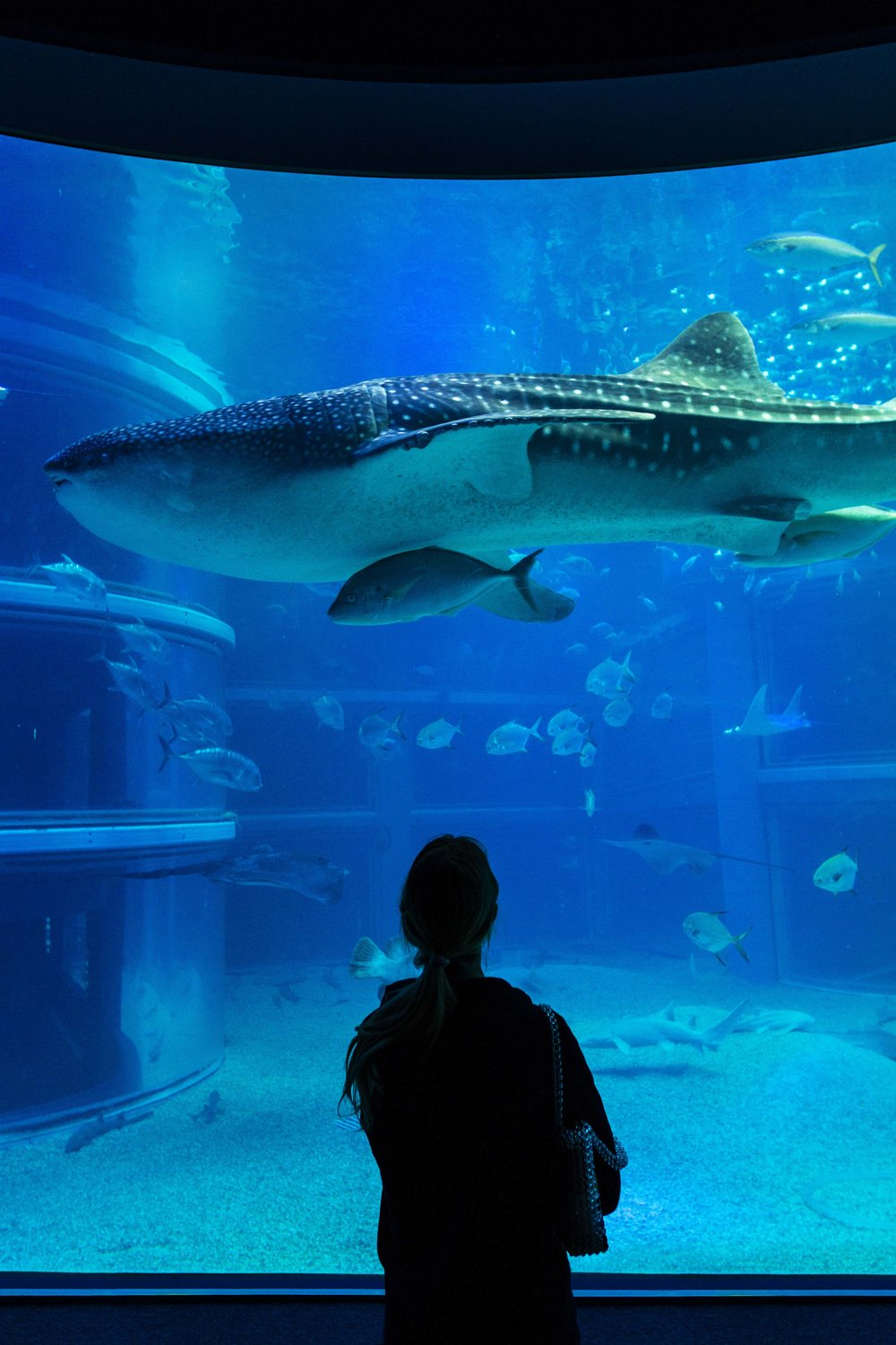 Elena stands under the Whale Shark at Osaka Aquarium