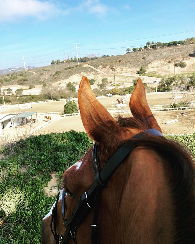 #5photos1day 2/5: Taking in the view after our jumping lesson ☀️ . . #lifebetweentheears  #rideon #equestrianphotos #thebestview #sandiego #equestrian #horsesofinstagram #equestrianblogger #horseblogger #paarden