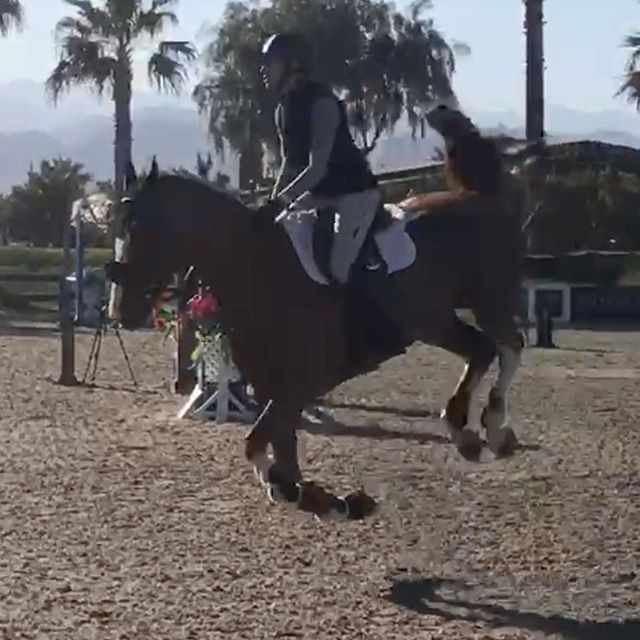 Yesterday he was sitting. Today he was levitating 😂 . . . #horselife #showjumper #horsesofinstagram #horses_of_instagram #horseaddict #pferdefotografie #horses #animalsofinstagram