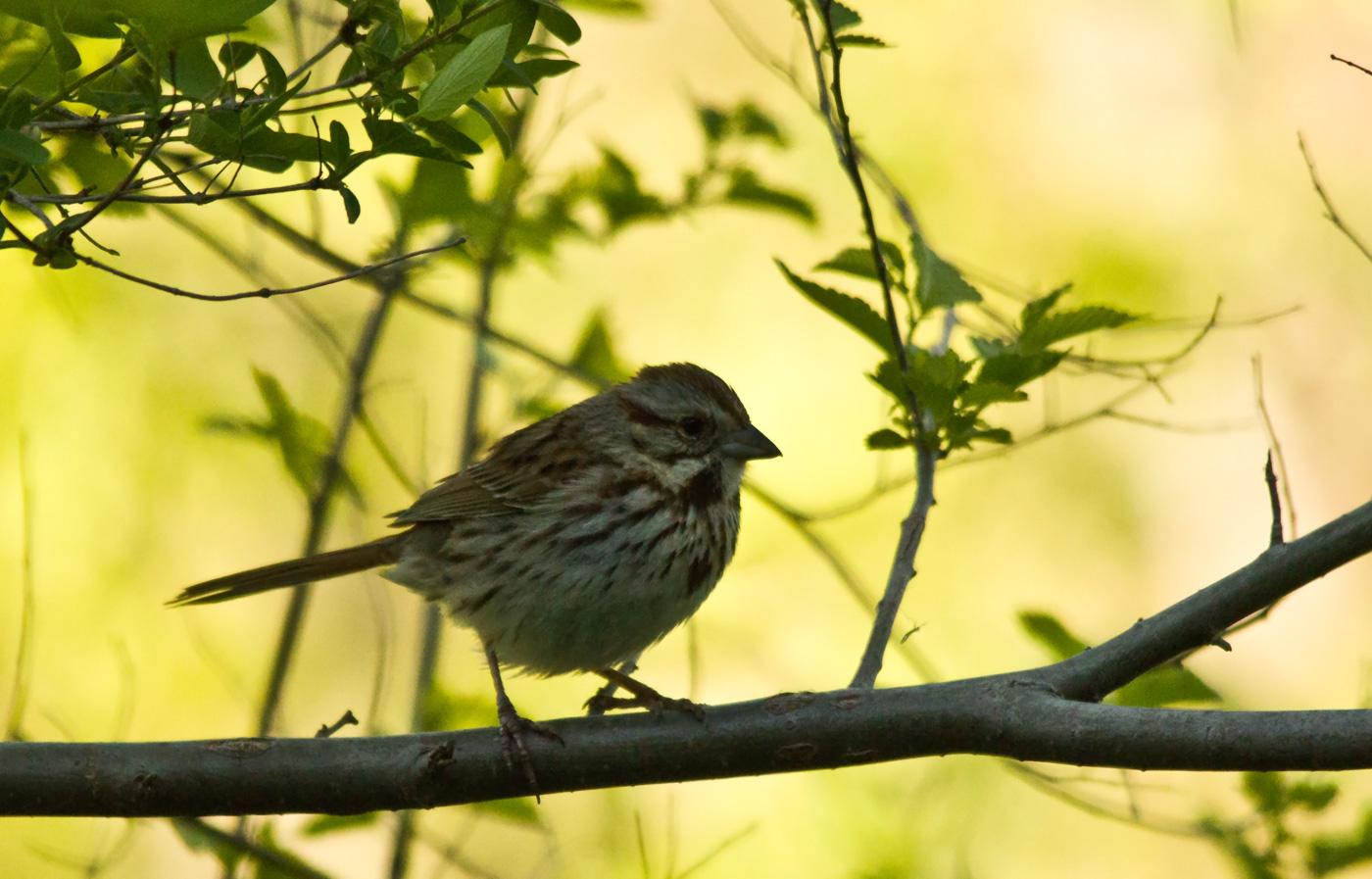 bird-on-twig