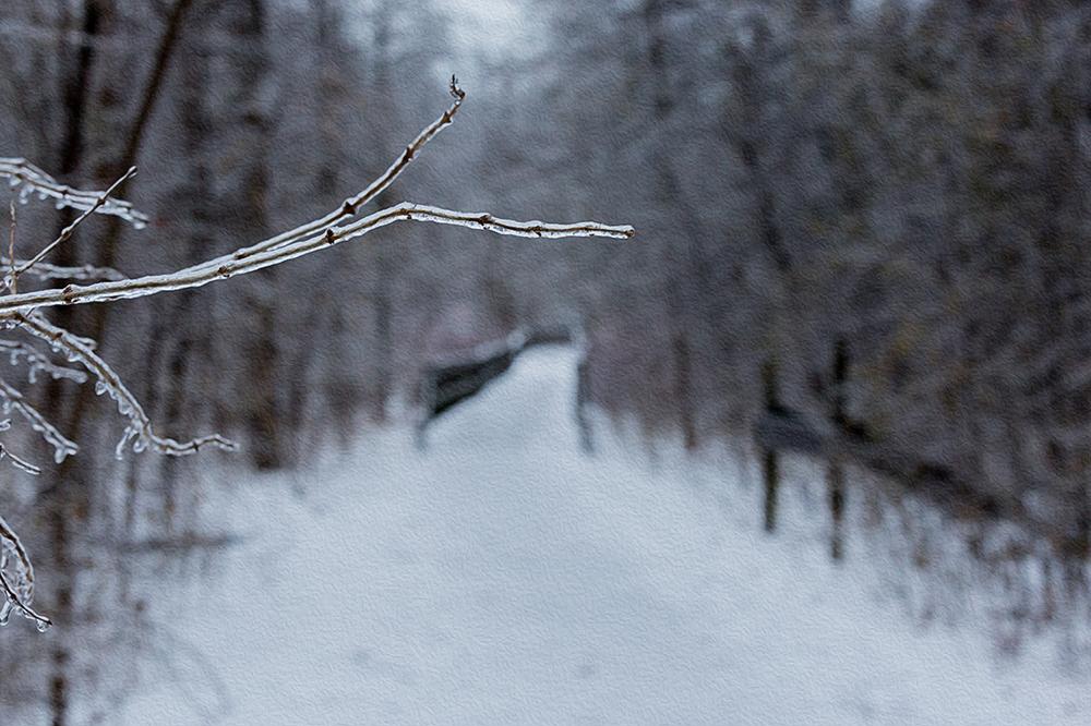Twig-in-Oilpaint.jpg