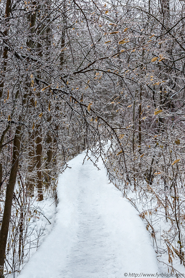 Rattray-Snowy-Path.jpg