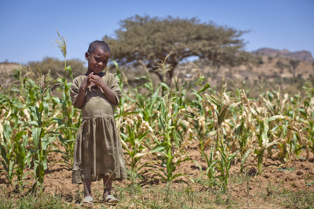 Social and Economic Impact of Child Undernutrition