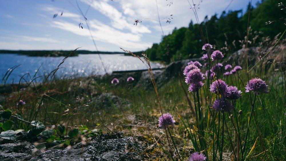 Kuva: Joonas Ojala (@joonasco)