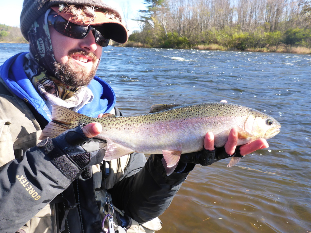 "17"" wild rainbow tout caught nymphing a riffle."