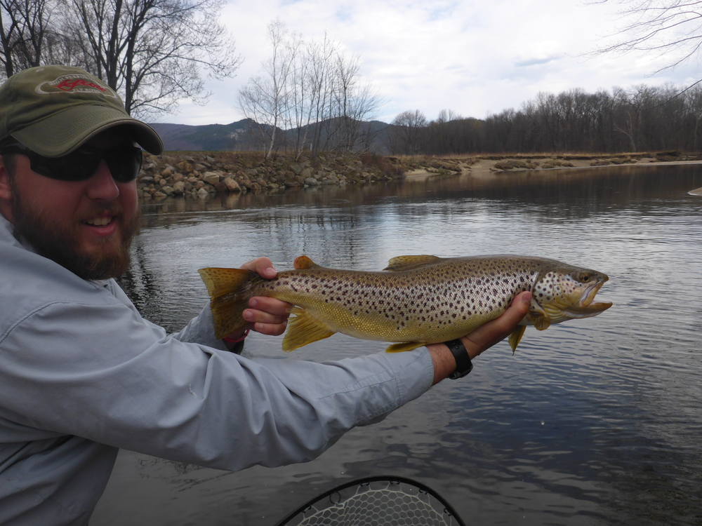 Saco river fly fishing guided fly fishing trips new for Best trout fishing in new hampshire
