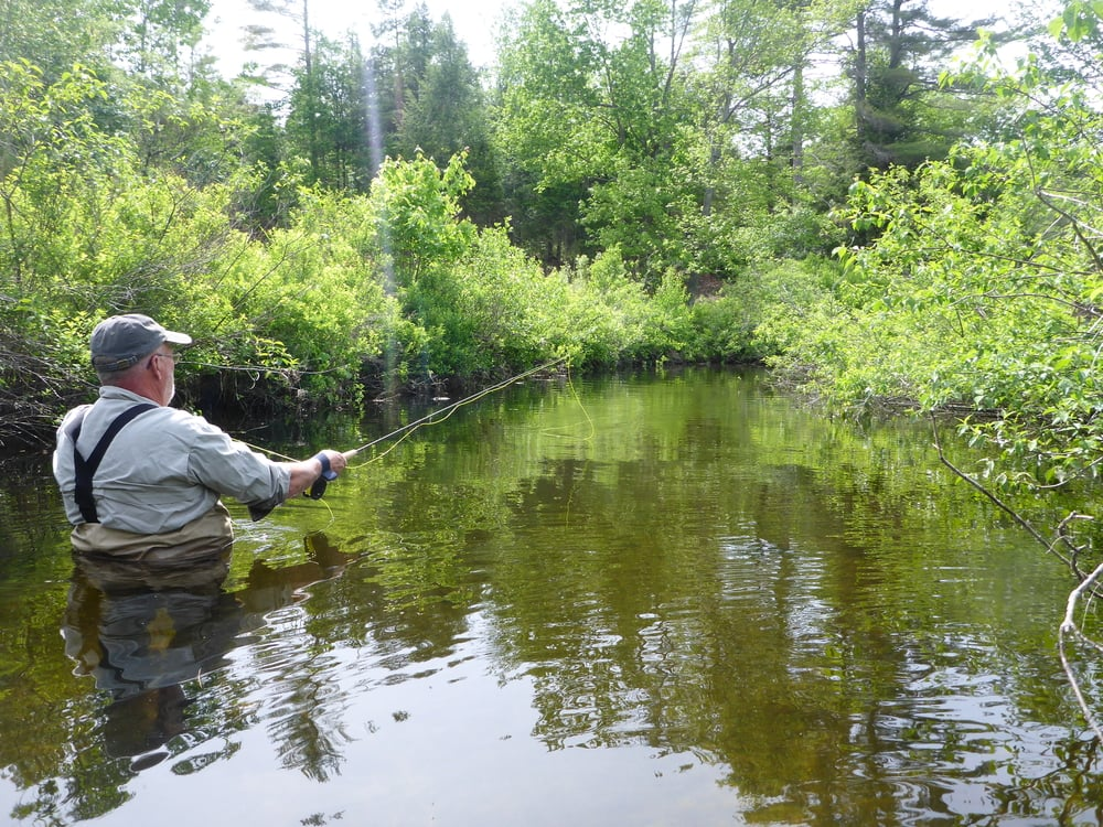 Wading for spring creek brookies.