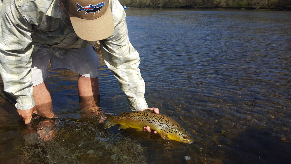 "Jeremy Hunt with a sunny day brown that he caught right after he said, "" There is a brown trout right behind that ledge."""