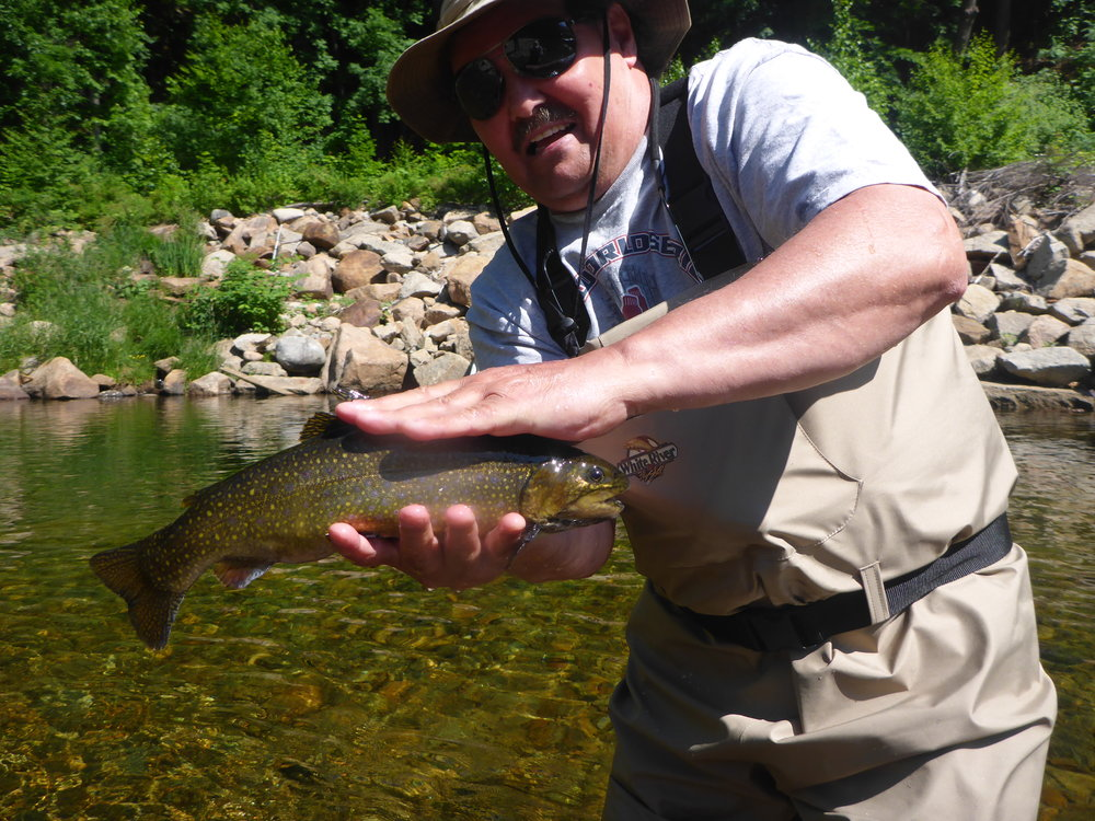 Ellis River Brook trout Late June 2016.