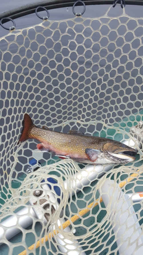 One of Andre's many brook trout.