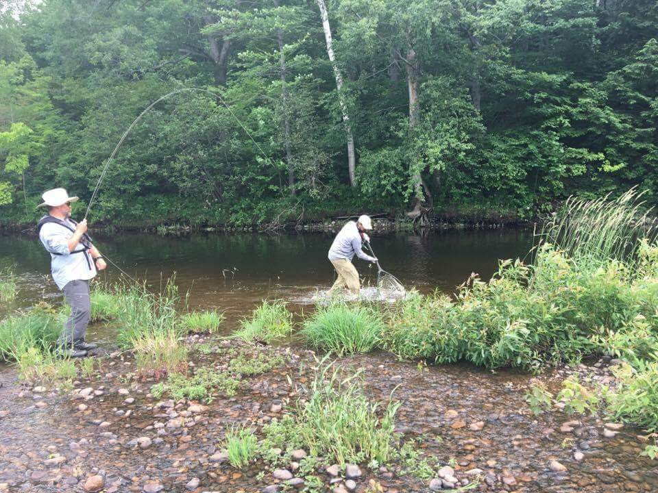 Netting an Androscoggin River brook Trout.