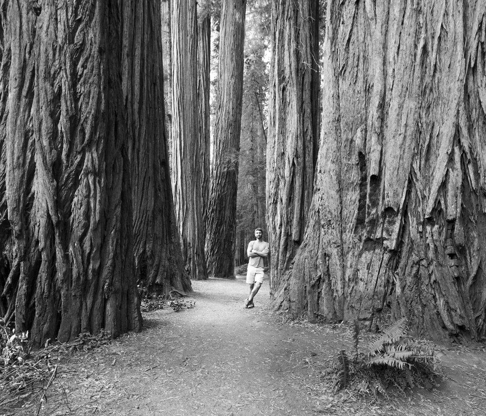 Redwood Groves, Jedediah Smith Redwood State Park, California.