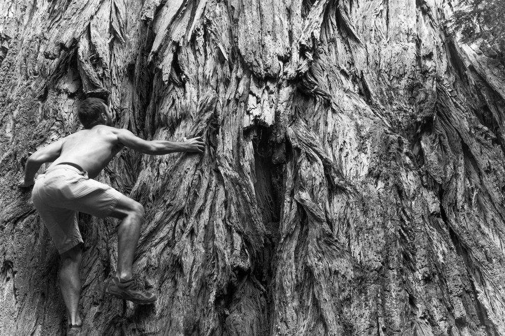 'Tree Climbing', Howland Hill Road, Jedediah Smith Redwood State Park