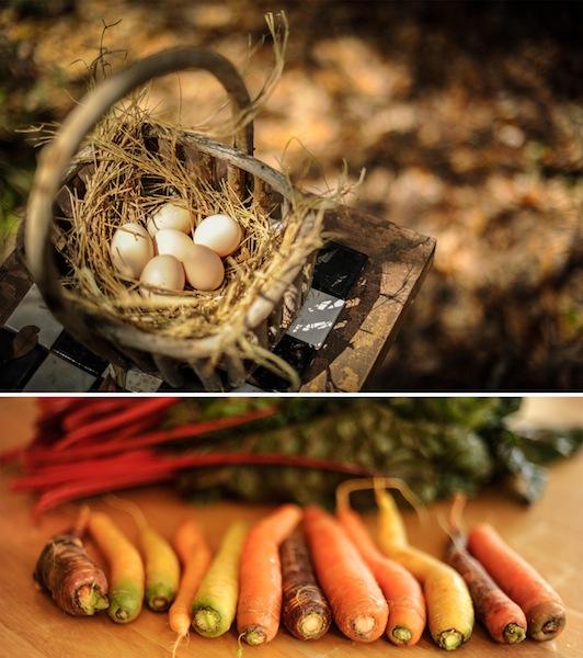 eggscarrots.jpg
